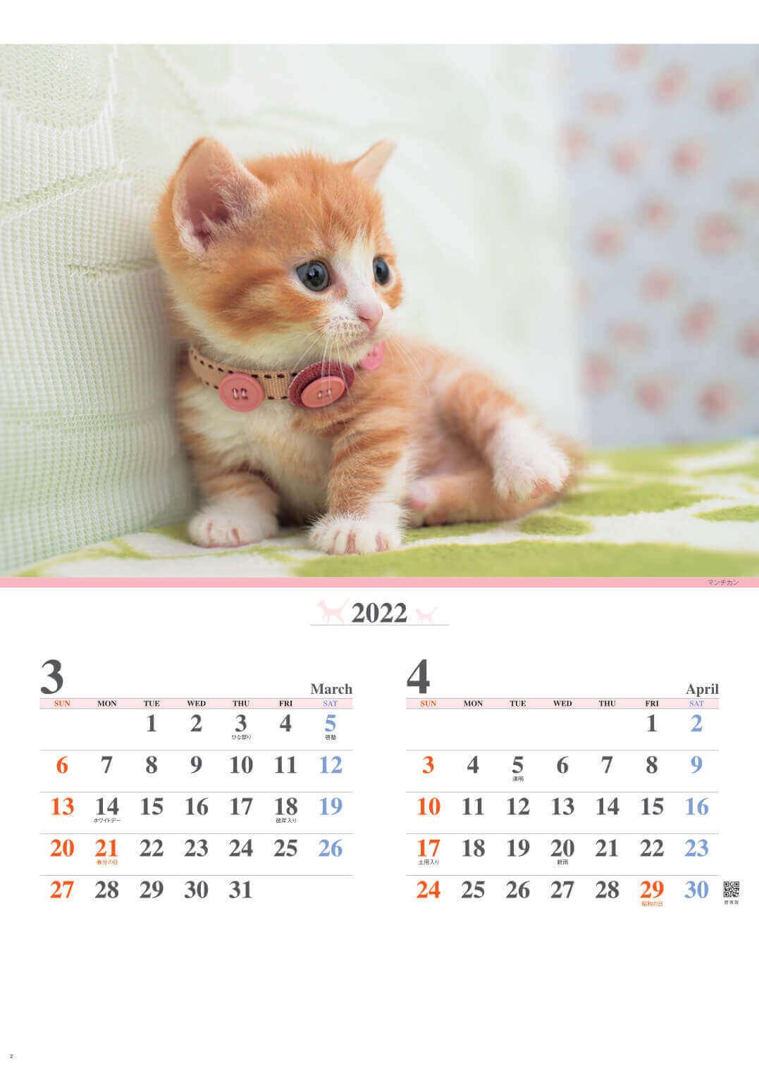 3-4月 マンチカン キャッツファミリー 2022年カレンダーの画像