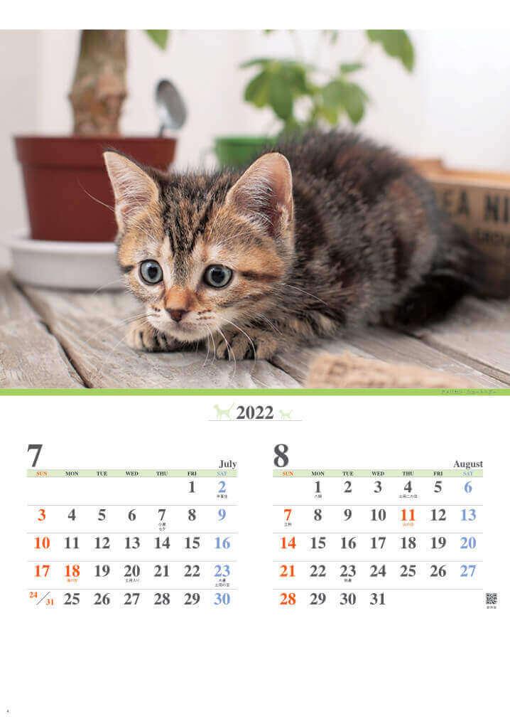 7-8月 アメリカン・ショートヘア キャッツファミリー 2022年カレンダーの画像