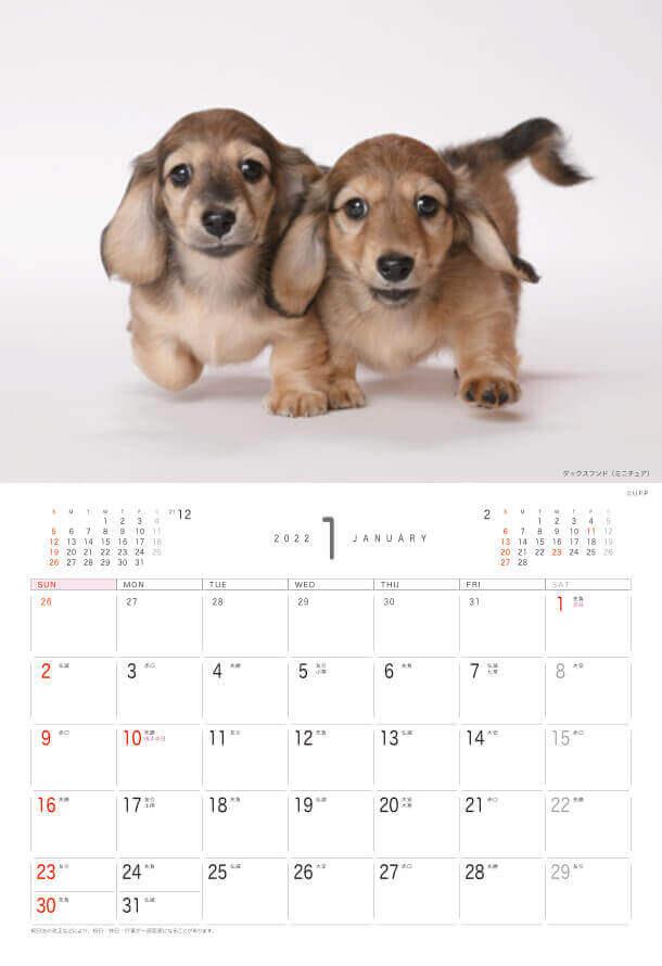 ダックスフンド(ミニチュア) Dog&Cat 2022年カレンダーの画像
