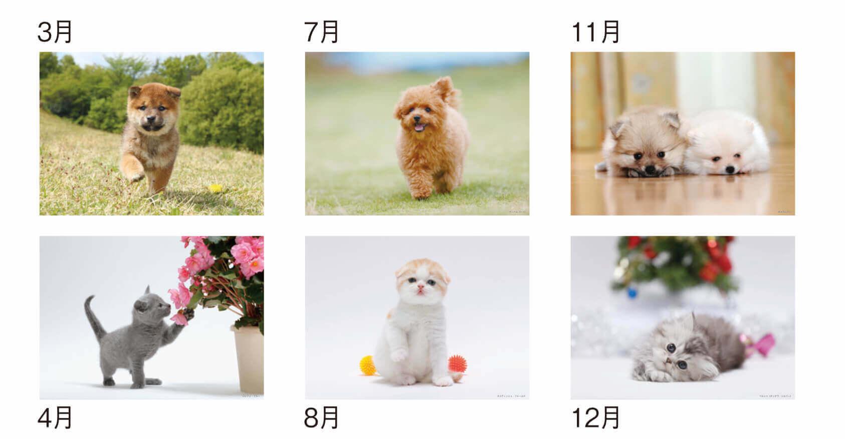 Dog&Cat 2022年カレンダーの画像