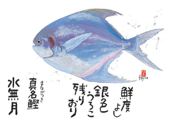 6月 マナガツオ 魚彩時記 -岡本肇- 2022年カレンダーの画像