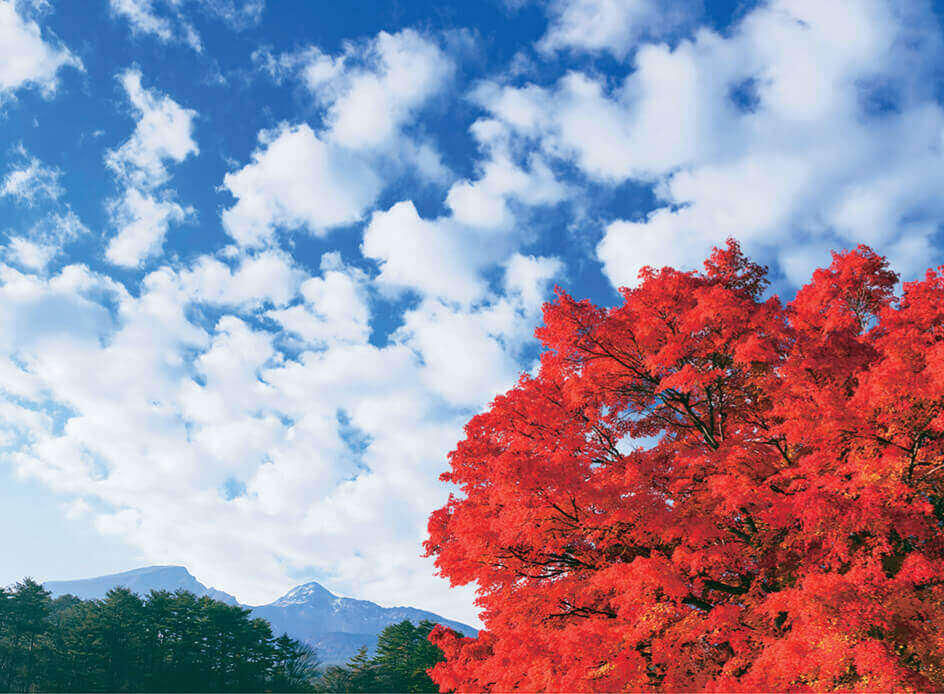 11月 紅葉とひつじ雲 SORA -空- 2022年カレンダーの画像