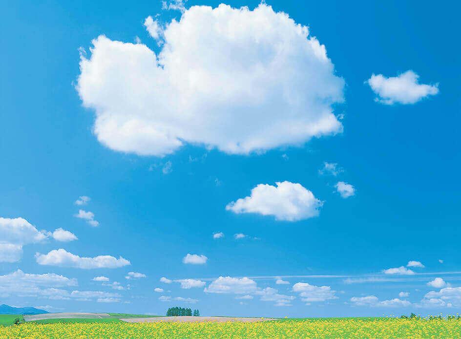 3月 大きなわた雲と菜の花畑 SORA -空- 2022年カレンダーの画像