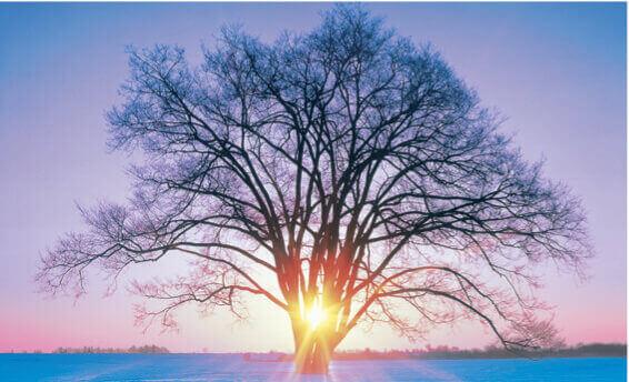 12月 中川郡(北海道) フォーエバージャパン 2022年カレンダーの画像