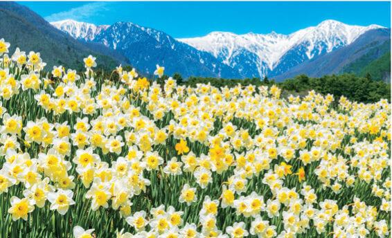 2月 駒ヶ根市(長野) フォーエバージャパン 2022年カレンダーの画像