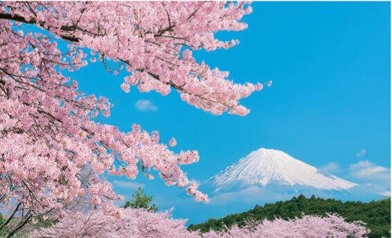 3月 富士市(静岡) フォーエバージャパン 2022年カレンダーの画像