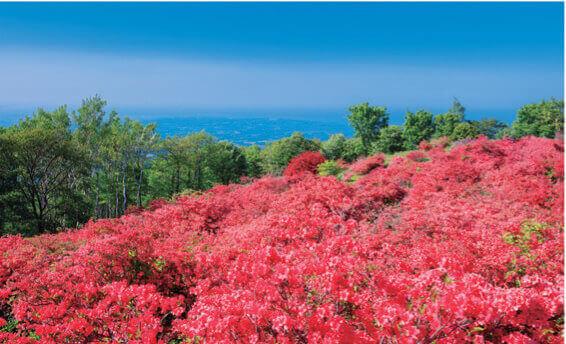 5月 三戸郡(青森) フォーエバージャパン 2022年カレンダーの画像