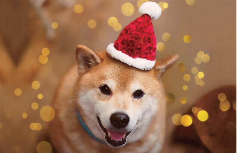 柴犬まるとおさんぽ 2022年カレンダーの画像