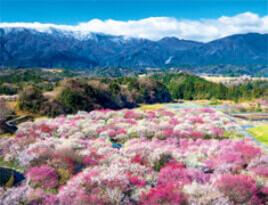 2-3月 いなべ市梅林公園(三重) 彩り日本(12月はじまり) 2022年カレンダーの画像