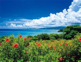 6-7月 石垣島(沖縄) 彩り日本(12月はじまり) 2022年カレンダーの画像