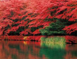 10-11月 雲場池(長野) 彩り日本(12月はじまり) 2022年カレンダーの画像
