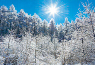 12月 白樺高原(長野) 輝く太陽 2022年カレンダーの画像