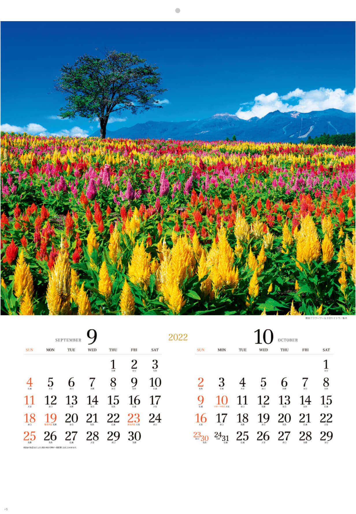9-10月 那須フラワーワールドのケイトウ(栃木) 花紀行 2022年カレンダーの画像