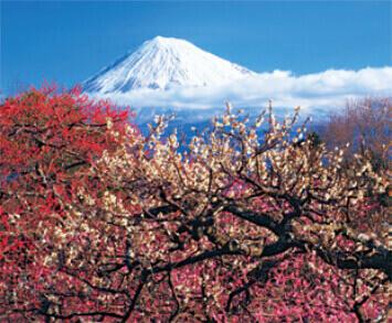 1-2月 岩本山公園の梅(静岡) 花紀行 2022年カレンダーの画像
