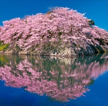 3-4月 彦根城-滋賀 美しい水辺(フィルムカレンダー) 2022年カレンダーの画像