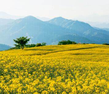 5-6月 三ノ倉高原菜の花畑(福島) 日本の詩情(フィルムカレンダー・小) 2022年カレンダーの画像