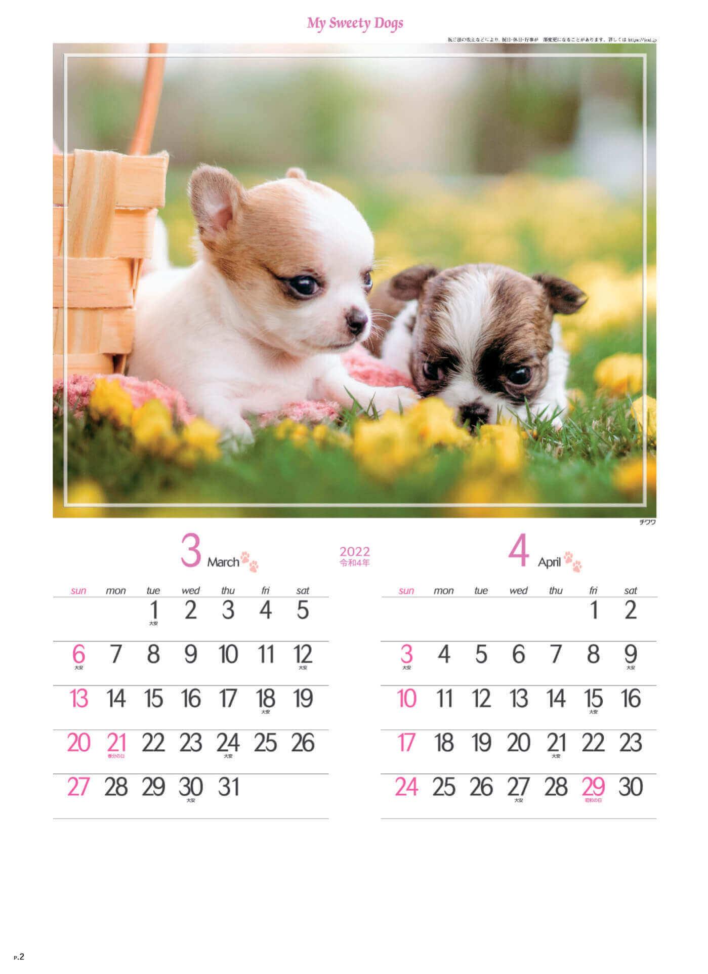 3-4月 チワワ マイスウィーティードッグ 2022年カレンダーの画像