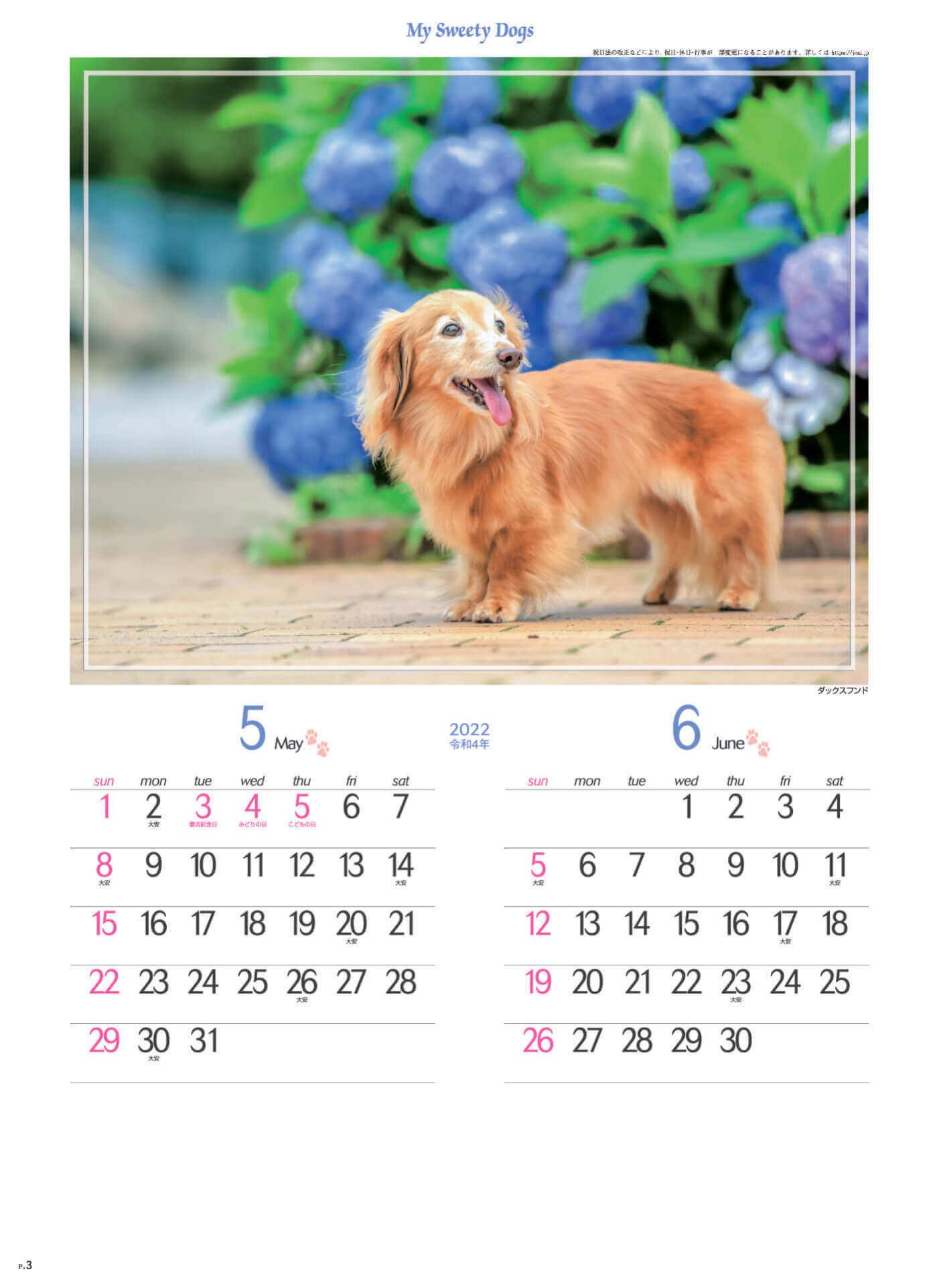 5-6月 ダックスフンド マイスウィーティードッグ 2022年カレンダーの画像