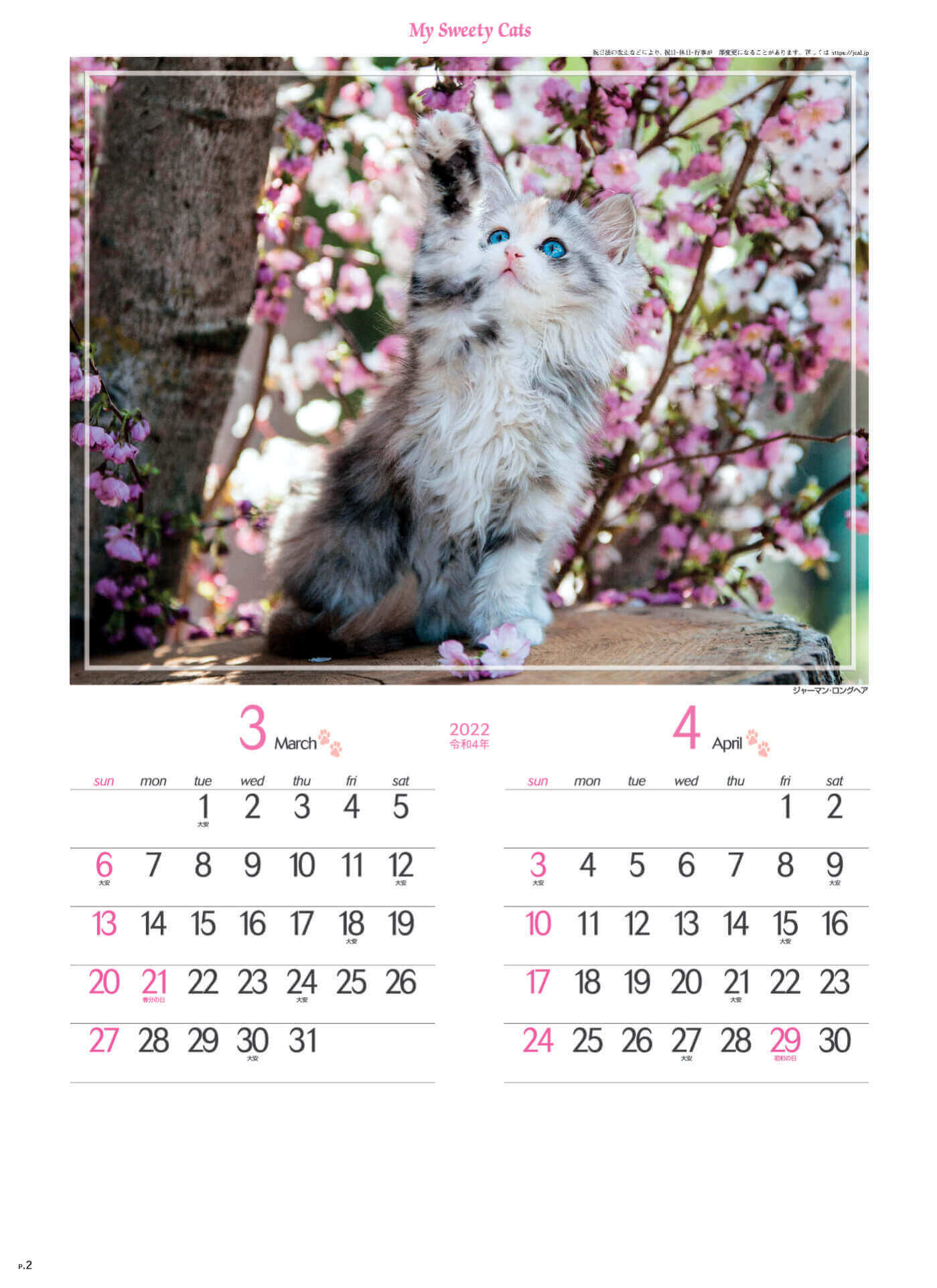 3-4月 ジャーマン・ロングヘア マイスウィーティーキャット 2022年カレンダーの画像