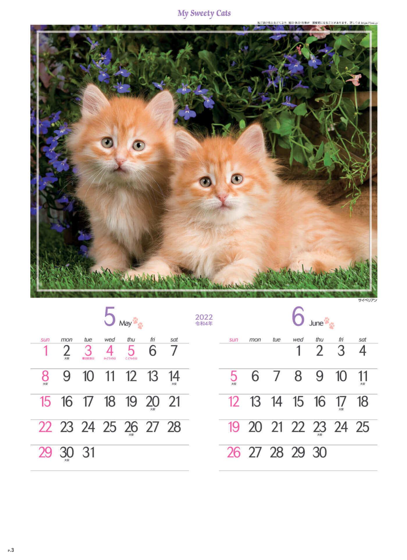 5-6月 サイベリアン マイスウィーティーキャット 2022年カレンダーの画像