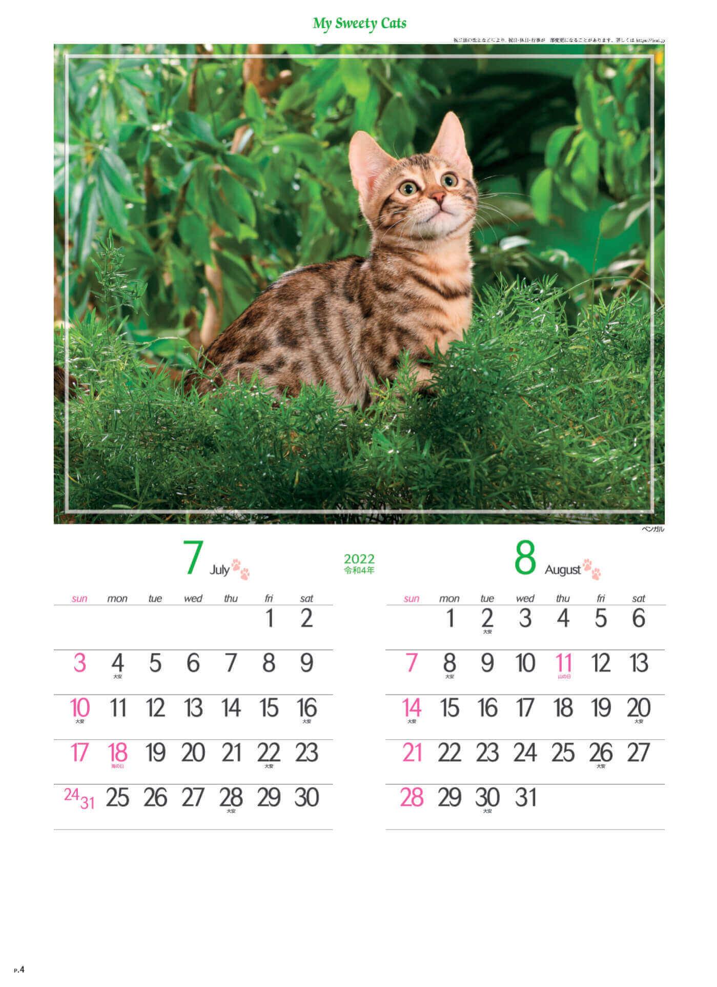 7-8月 ベンガル マイスウィーティーキャット 2022年カレンダーの画像
