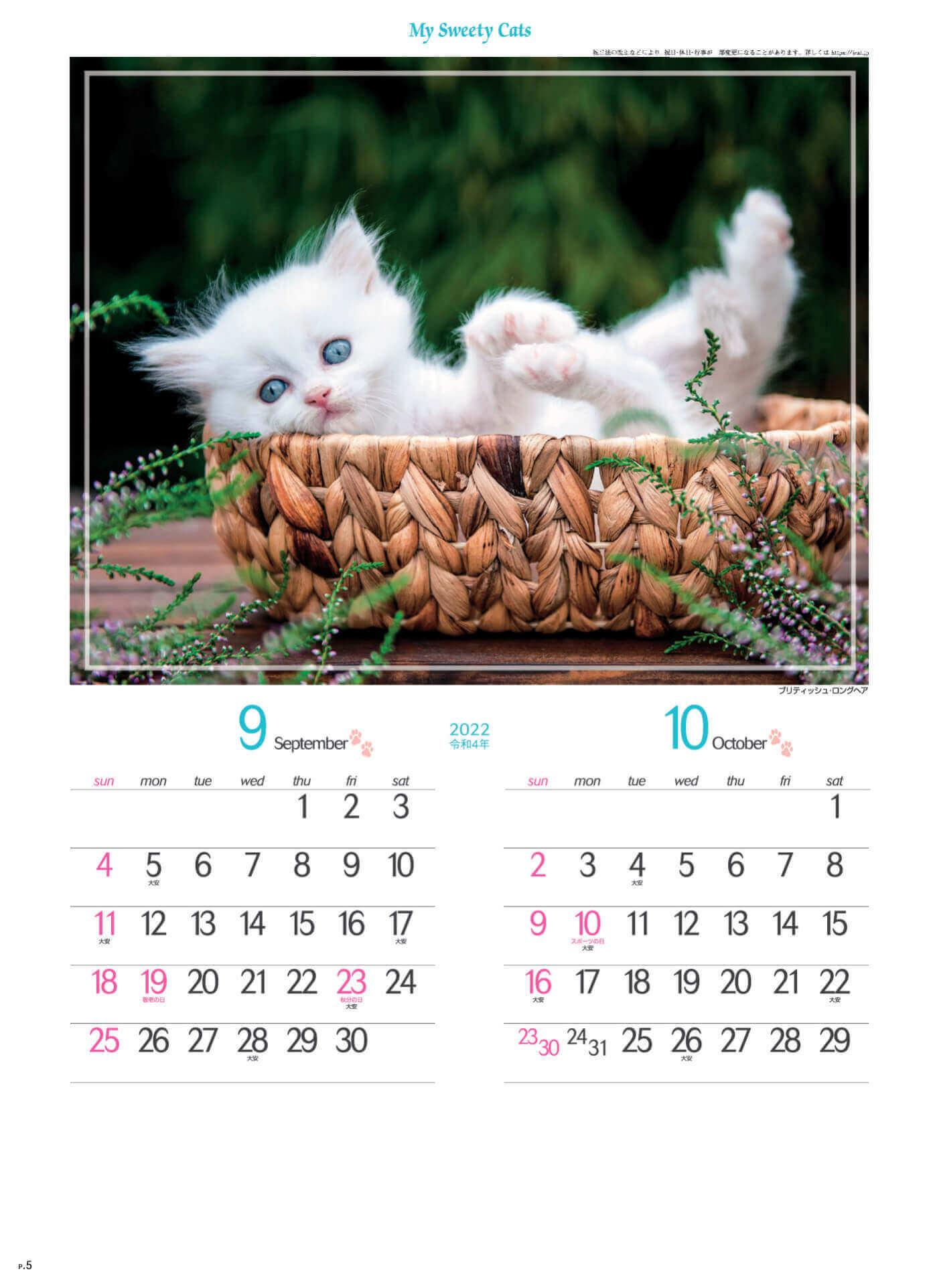 9-10月 ブリティッシュ・ロングヘア マイスウィーティーキャット 2022年カレンダーの画像
