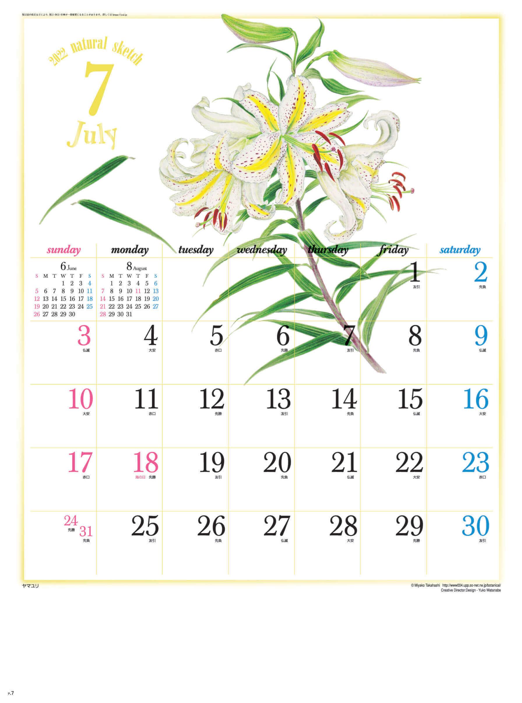 7月 ヤマユリ ナチュラルスケッチ 2022年カレンダーの画像