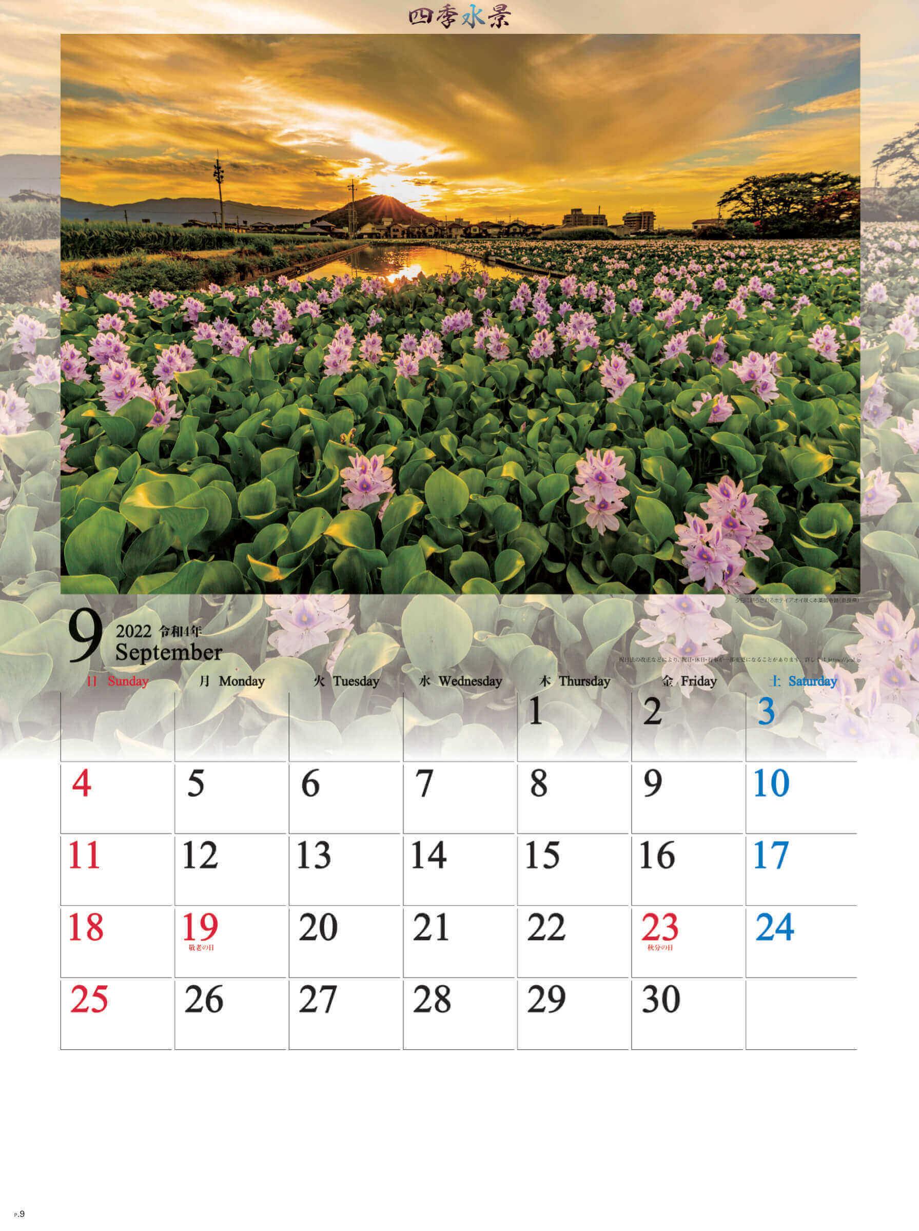 9月 ホテイアオイ咲く本薬師寺跡(奈良) 四季水景 2022年カレンダーの画像