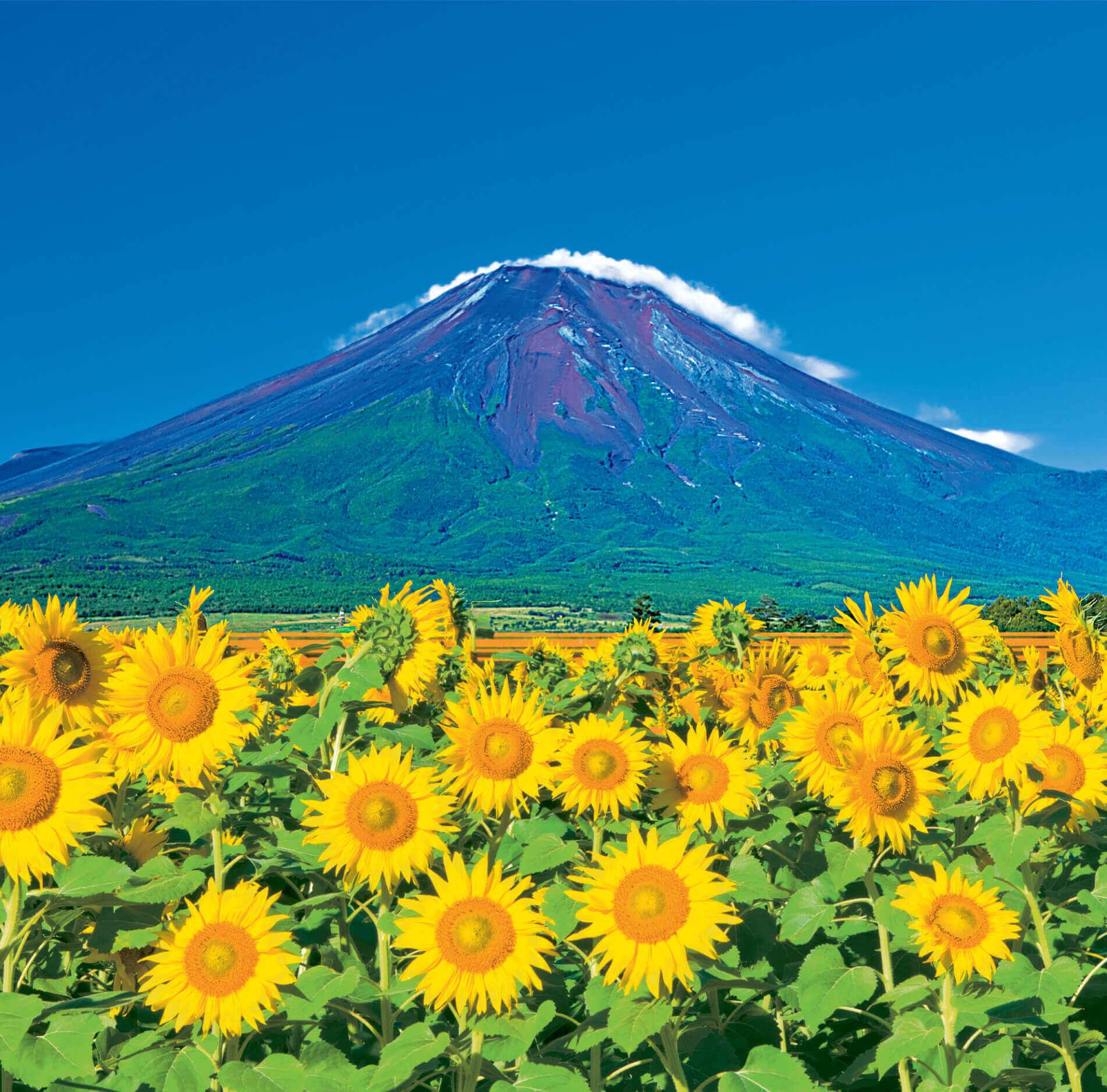 7-8 山中湖村より(山梨) 富士山(フィルムカレンダー) 2022年カレンダーの画像