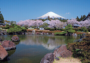3-4月 富士山麓大石寺より(静岡) 富士の四季 2022年カレンダーの画像