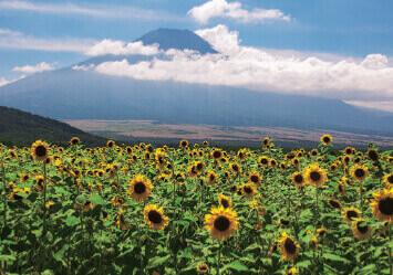7-8月 山中湖平野より(山梨) 富士の四季 2022年カレンダーの画像