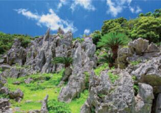 7月 大石林山(沖縄) 天地自然・森田敏隆写真集 2022年カレンダーの画像
