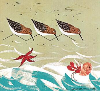 5-6月  Beach Bird チャーリー・ハーパーの贈り物 2022年カレンダーの画像