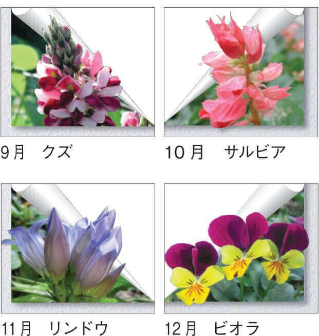 花便り 2022年カレンダーの画像