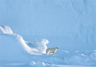 12月 ホッキョクグマ 世界動物遺産 2022年カレンダーの画像