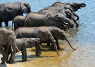 3月 アフリカゾウ 世界動物遺産 2022年カレンダーの画像
