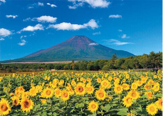 8月 ひまわりと富士山(山梨) 富士十二景 2022年カレンダーの画像