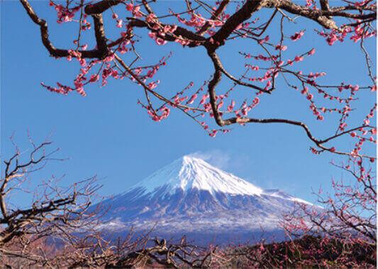 2月 紅梅と富士山(静岡) 富士十二景 2022年カレンダーの画像