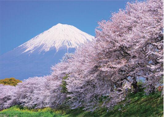 4月 龍厳淵より桜と富士山」(静岡) 富士十二景 2022年カレンダーの画像