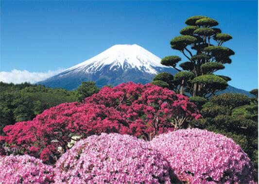 5月 忍野村よりつつじ庭園と富士山(山梨) 富士十二景 2022年カレンダーの画像