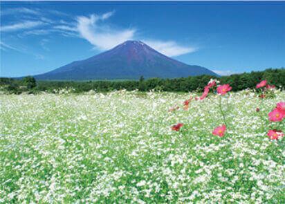 6月 山中湖よりかすみ草と富士山(山梨) 富士十二景 2022年カレンダーの画像