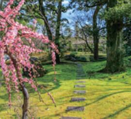 3月 城南宮(京都) 庭の詩情 2022年カレンダーの画像