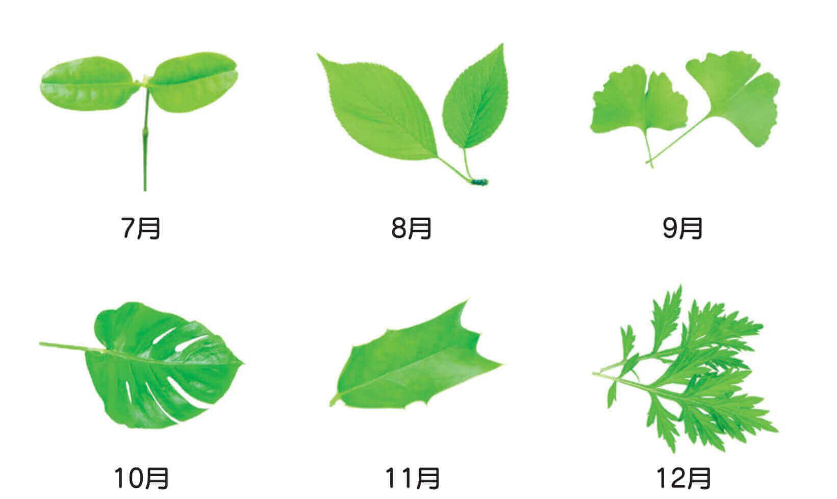 エコグリーンカレンダー 2022年カレンダーの画像